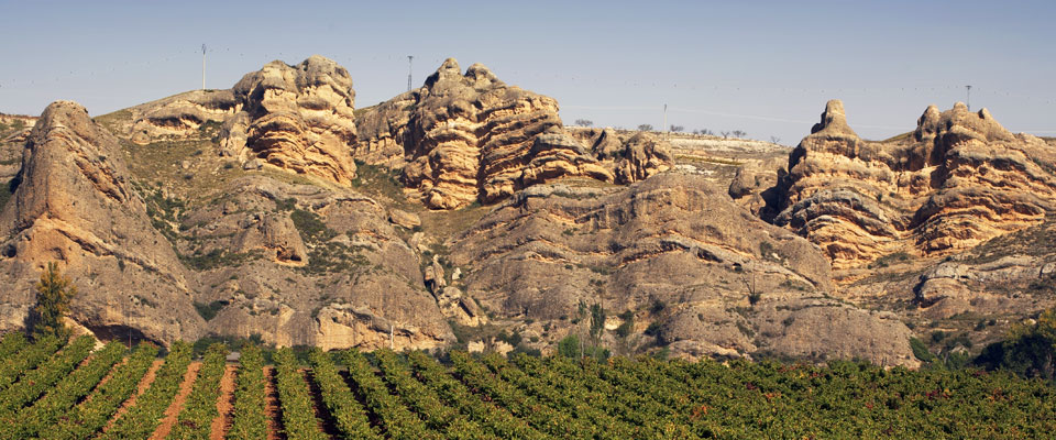 Image of a few vine-stocks in the first plane and to the bottom a few crags.